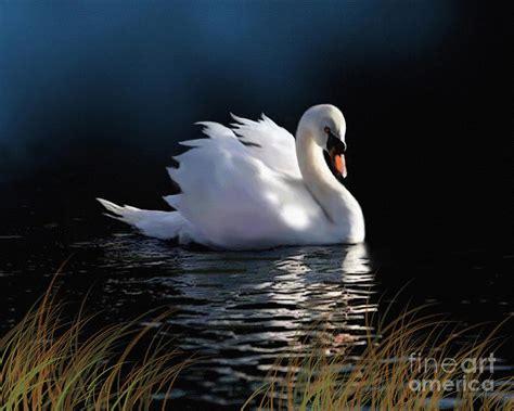 Swan Elegance Painting by Robert Foster