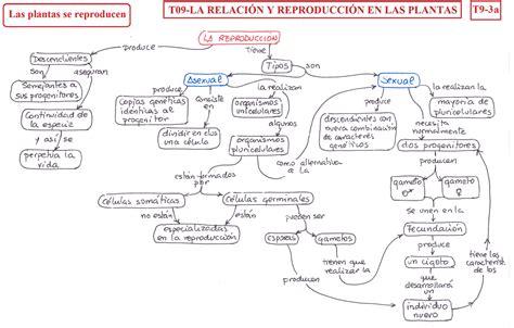 T09- La relación y la reproducción en plantas - B·I·O--G·E ...