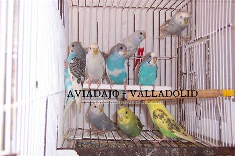 TABLÓN DE ANUNCIOS .COM   Periquitos con fotos, Mascotas