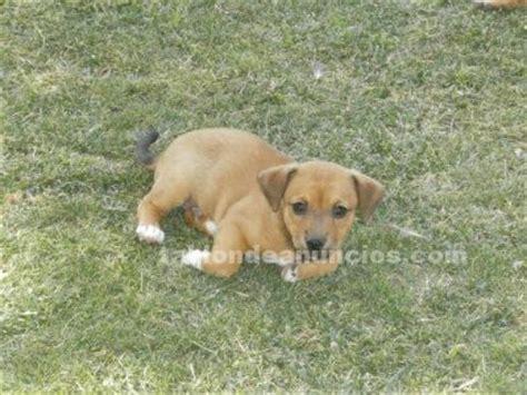 TABLÓN DE ANUNCIOS .COM - Se regalan cachorros con fotos ...