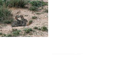 TABLÓN DE ANUNCIOS .COM - Venta de conejos de campo vivos ...
