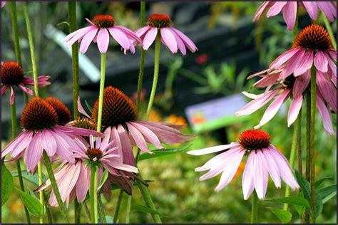 Taller gratuito plantas medicinales energéticas ...