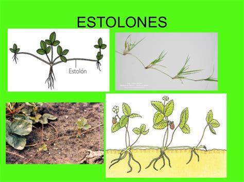 Taller Reproduzcamos Nuestras de Plantas : Propagacion de ...