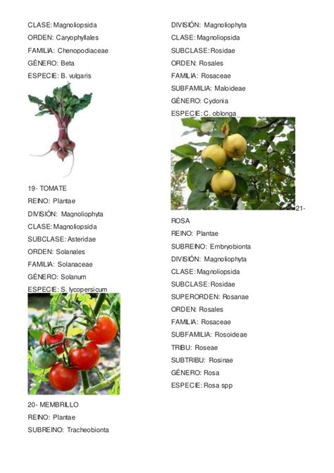 Taxonomia plantas