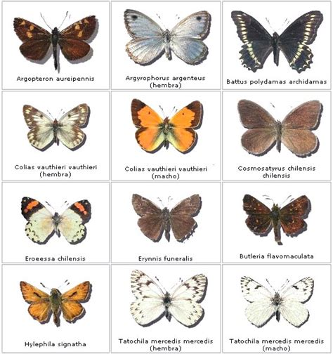 TECNOLOGIA NATURA   El Color de las Mariposas