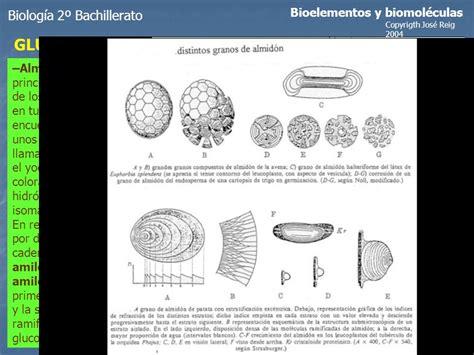 TEMA-2 GLÚCIDOS Biología 2º Bachillerato Bioelementos y ...