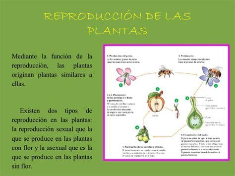 Tema 4 las plantas
