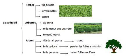 TEMA 9: Les plantes. L'agricultura | Blog de 4t Escola Salicrú