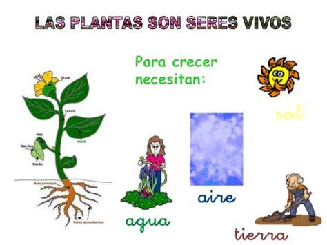 Tema las plantas para primaria - Imagui