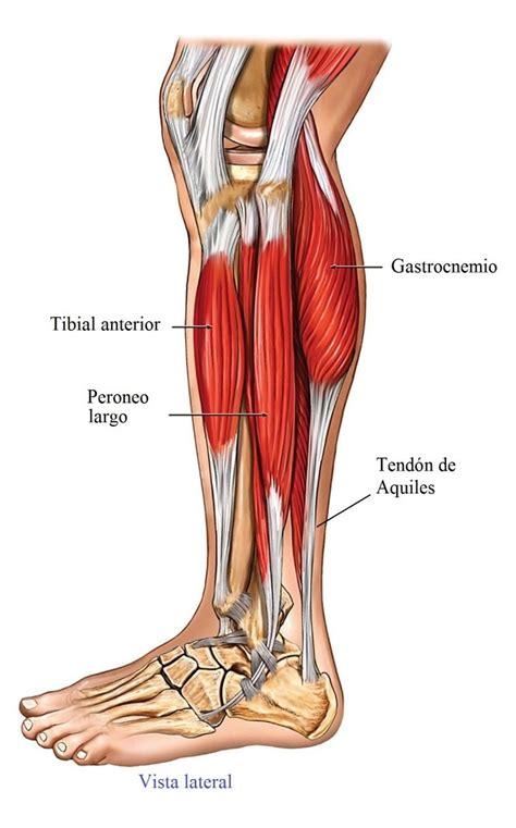 Tendinitis del tendón de Aquiles, tratamiento, remedios ...