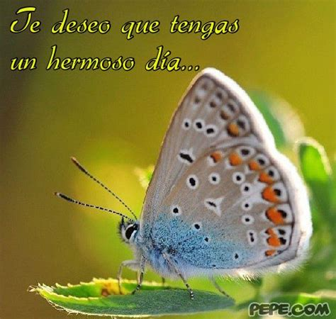 Tengas Un Hermoso Dia Related Keywords & Suggestions ...