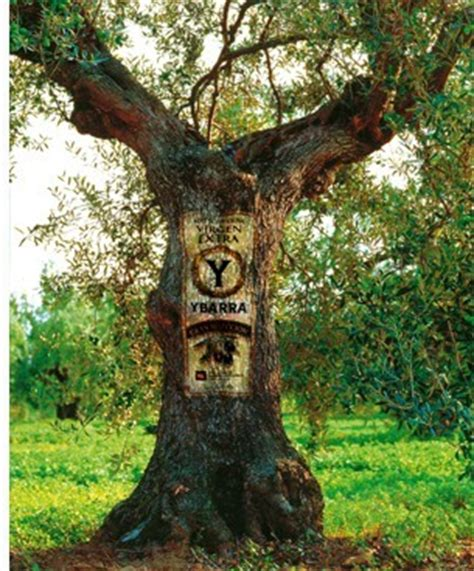 Términos relacionados con el Aceite de Oliva
