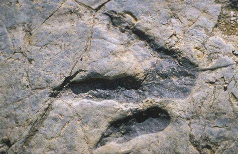 Terópodos | Dinosaurios de la Ruta de las Icnitas en las ...