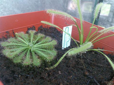Terrario2 Plantas Carnívoras - $ 130.00 en Mercado Libre