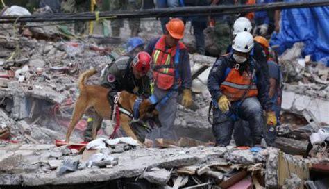 Terremoto en México: Estos son los héroes caninos del ...