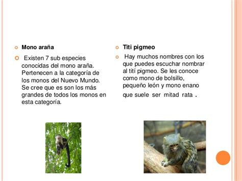 Texto de divulgación Cientifica  Los monos