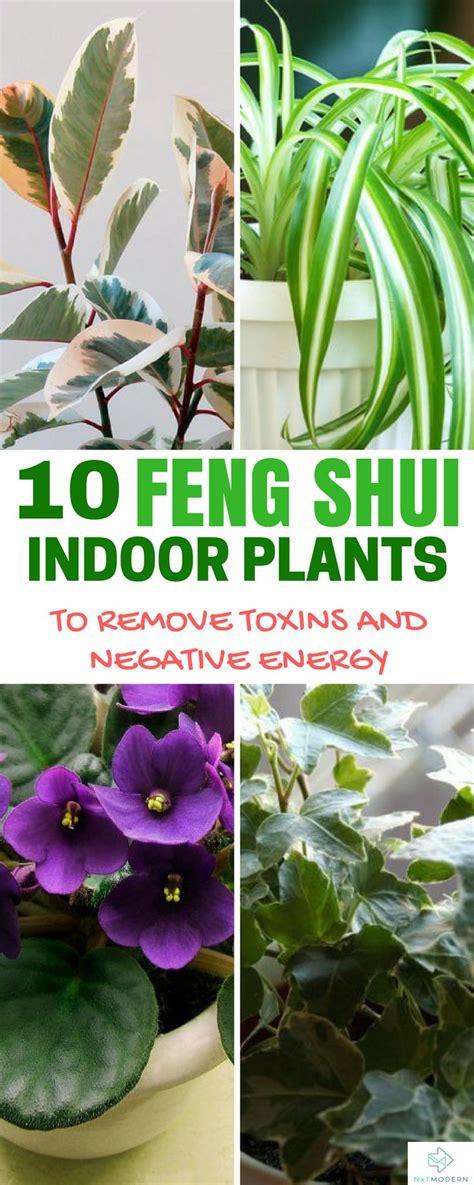 The 25+ best Feng shui plants ideas on Pinterest | 3 feng ...