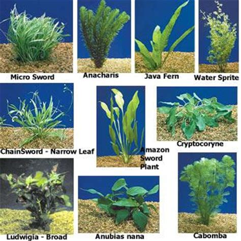 The adaptation in the aquatic submerged plants | Science ...