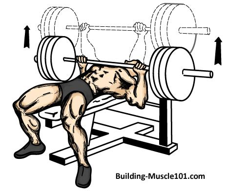 The Bench Press Exercise
