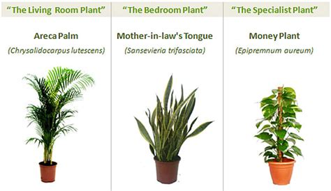 The Best Indoor Plants for your Home Office   Get Fresh Air
