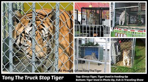 The Dodo | Free Tony The Tiger