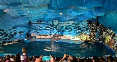 The dolphin show: fotografía de L'Aquàrium de Barcelona ...