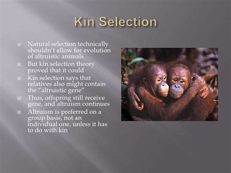 The evolution of kin selection