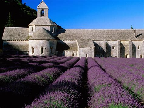 The Lavender Field of Provence – France – World for Travel