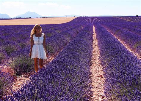 The Lavender Fields of Provence, France – JetsetChristina
