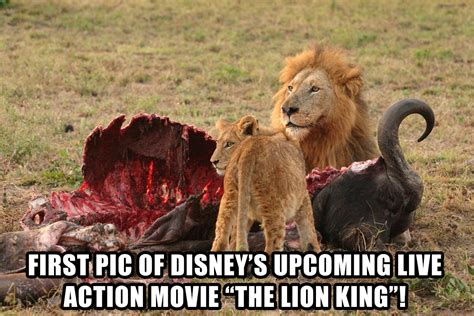 the lion king meme   100 images   pretty the lion king ...