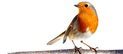 The meaning and symbolism of the word - Bird