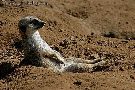 The Meerkat Advert New Compare Market Cheap Car Insurance
