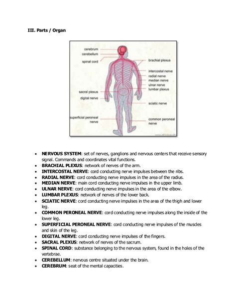 The nervous system, parts, function, illness and diseases