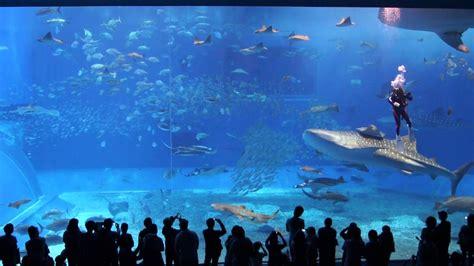 The Okinawa Churaumi Aquarium and The Berlin Hauptstadt ...