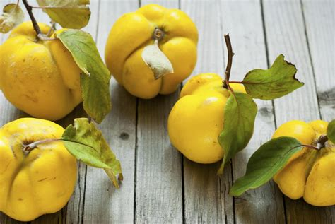 The quince: The fruit that started the Trojan War? | The ...