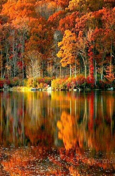 The rich colors of Autumn. | Mary la dulce | Pinterest ...