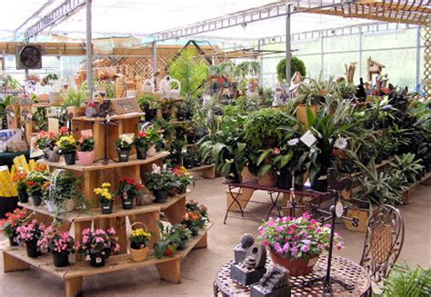 The Scopes Attainable Through Online Garden Centers