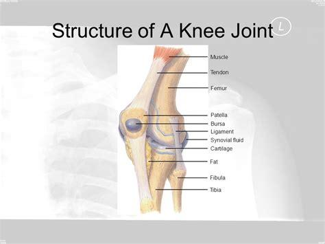 The Skeletal System.   ppt video online download