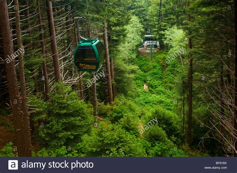 The Sky Trail gondola ride through redwood forest, Trees ...