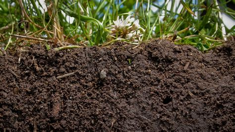 The Surprising Healing Qualities... of Dirt - Our World