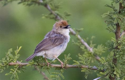 THE TOP 10: Most Awesome Bird Names in the World « ABA Blog