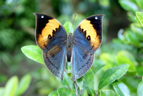 The Top Ten Most Beautiful Butterflies In The World - YouTube
