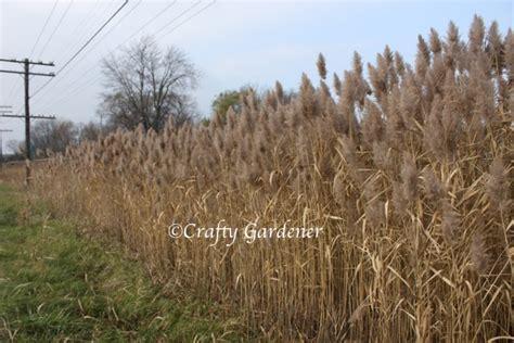 The Wild Grasses | craftygardener.ca