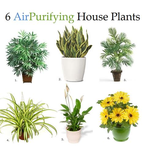 These 6 House Plants Can Remove Impurities From the Air ...