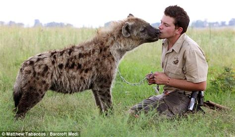 This Hyena Was Cornered By A Pack Of Wild Dogs, But What ...