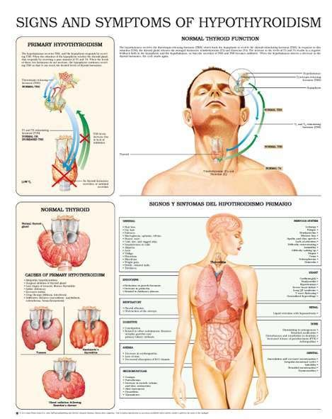 Thyroid Report