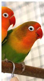 Tienda de aves en sevilla,tienda de aves exoticas en ...