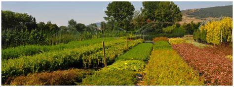 Tienda online de plantas | Villa Miranda Viveros en Navarra