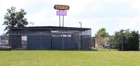 Tiger | Criminal