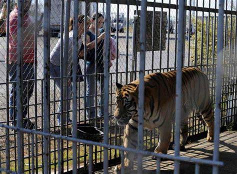 Tigers in America - Roadside Zoos